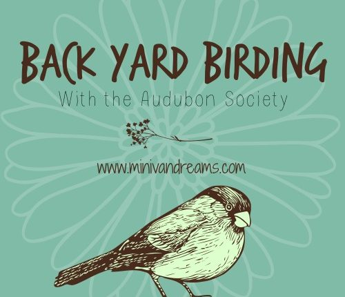 Back Yard Birding with the Audubon Society via Mini Van Dreams #birding #gardening #audubonsociety