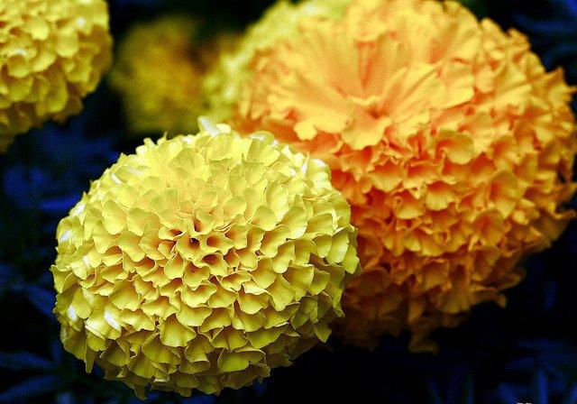 The Yellow Weeds via Mini Van Dreams