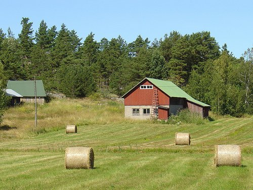 Visit to the Farm   Guest Post by Nana