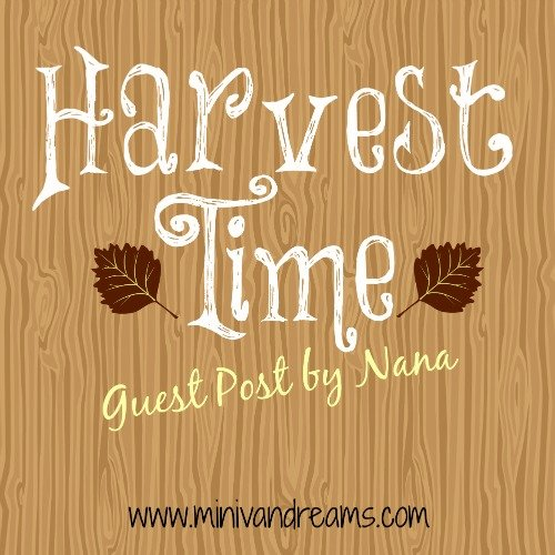 Harvest Time | Guest Post by Nana via Mini Van Dreams #nanascorner #everydaylife #guestpost