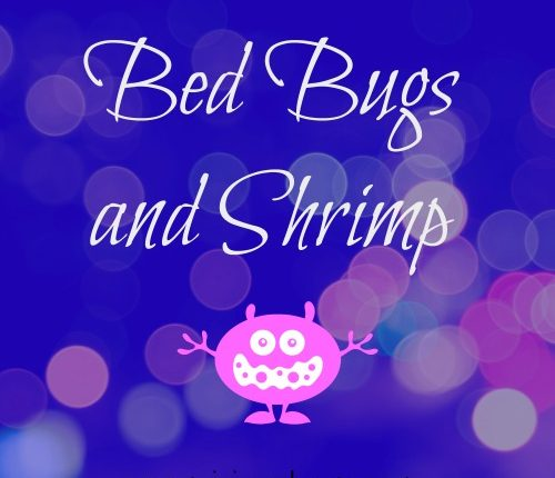 Bed Bugs and Shrimp | Mini Van Dreams